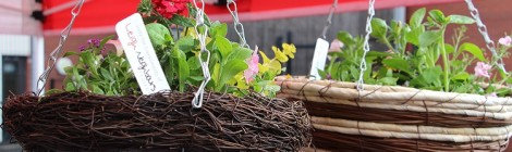 Our autumn hanging basket worshops are back!