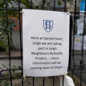 butterfly campaign 2021 sacred heart