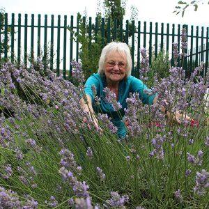 community garden lavendar
